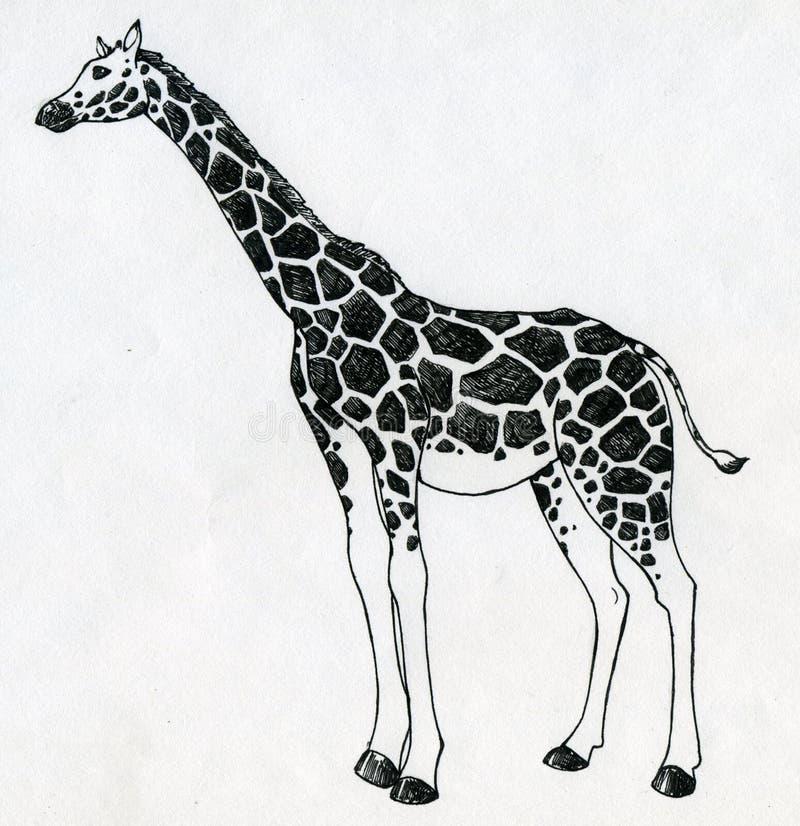 Жираф иллюстрация штока