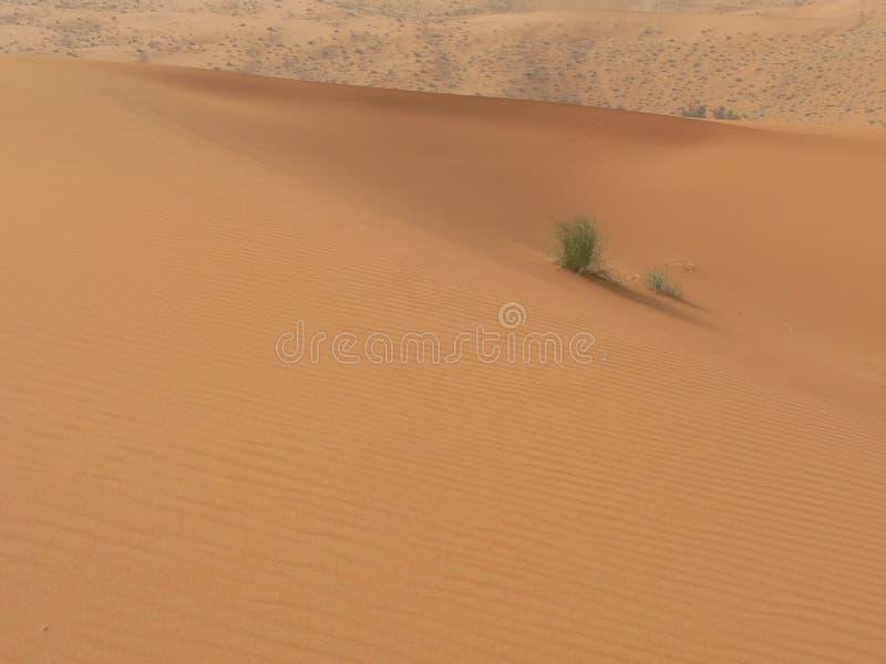 житель Саудовской Аравии пустыни Аравии стоковое изображение rf
