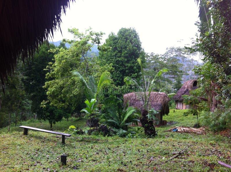Жить в тропическом лесе в Перу стоковое изображение