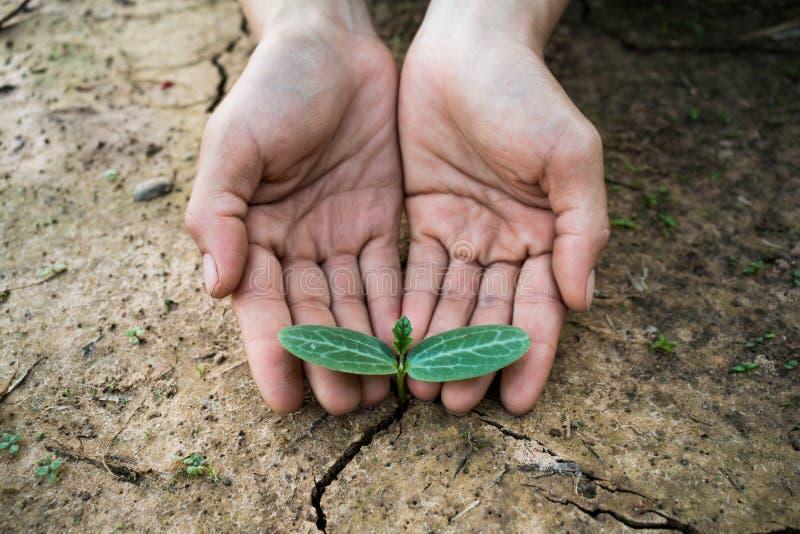 Жить с засухой дерева стоковая фотография rf