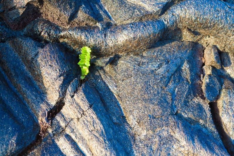 Жидкая охлаженная лава стоковое изображение rf