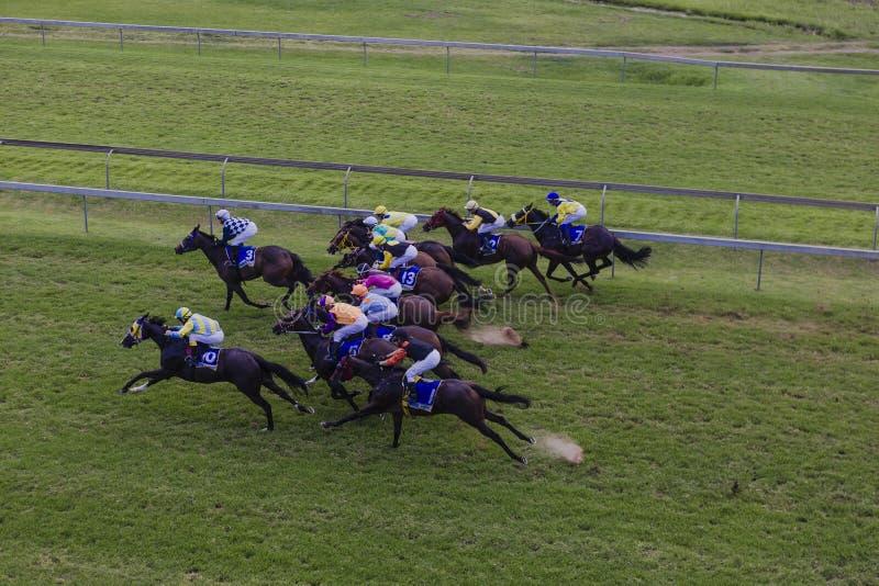 Жокеи лошадей участвуя в гонке обозревать стоковое фото