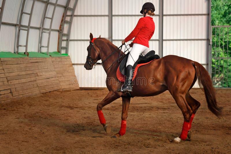 Жокей ехать походка лошади стоковая фотография