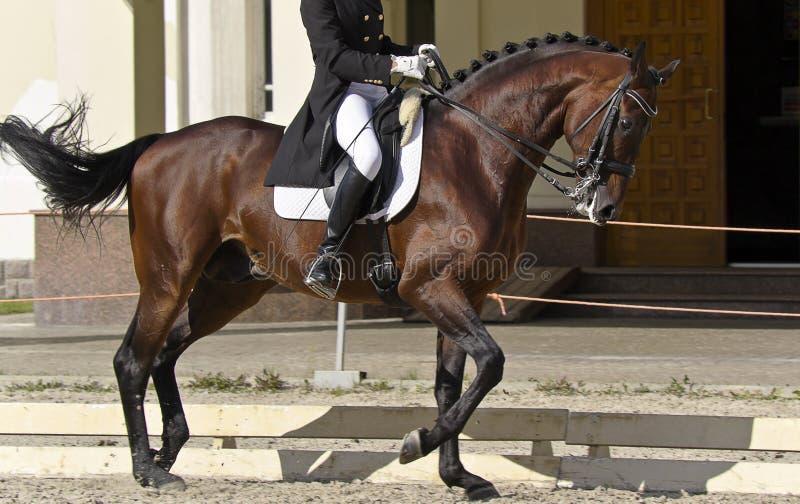 жокей лошади стоковые изображения rf