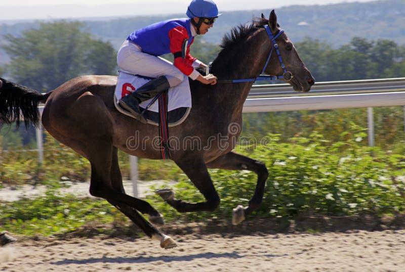 жокей лошади hippodrome 2009 изгородей скачет сезон Тироль препоны merano maia стоковые изображения