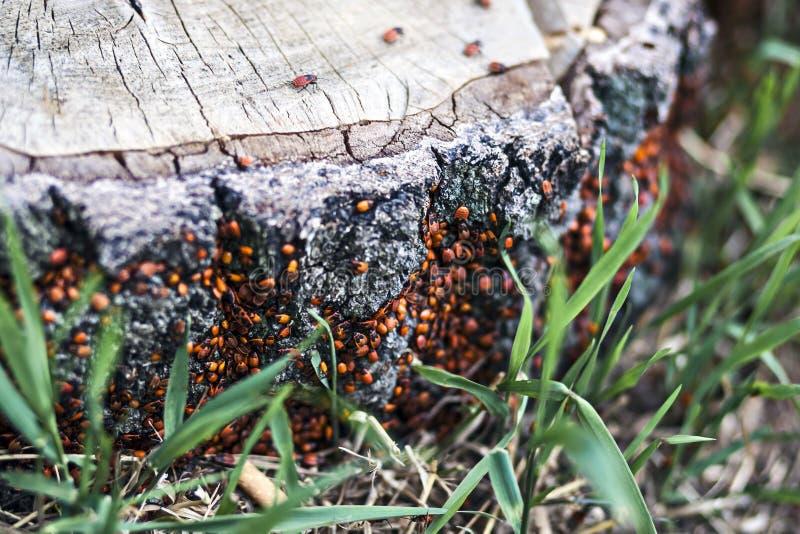 Жуки на пне дерева стоковое изображение