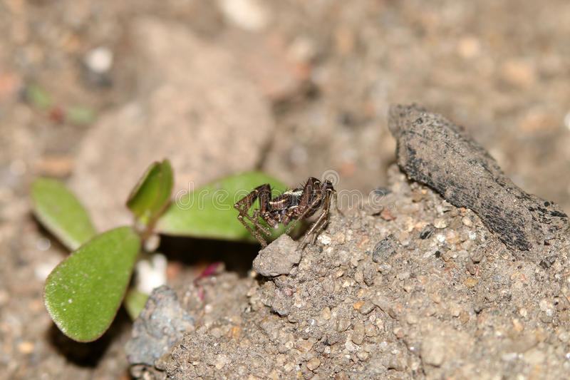 Жуки, пауки, насекомые стоковое фото rf