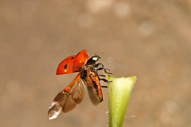 Жуки, пауки, насекомые стоковое изображение rf