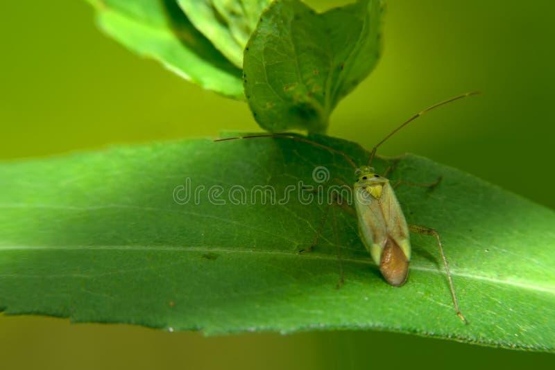 Жук сидит на зеленых лист стоковое фото rf