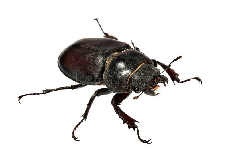 жук стоковое изображение rf