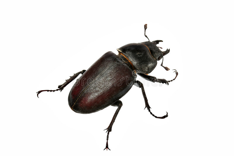 жук стоковое изображение