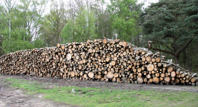 Журналы вала лесохозяйства. стоковое изображение rf