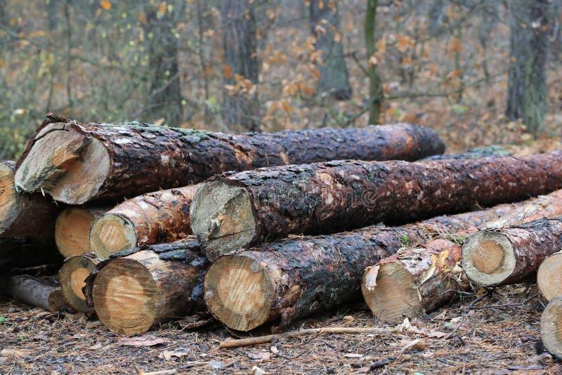 Журналы сосны деревянные стоковые фото
