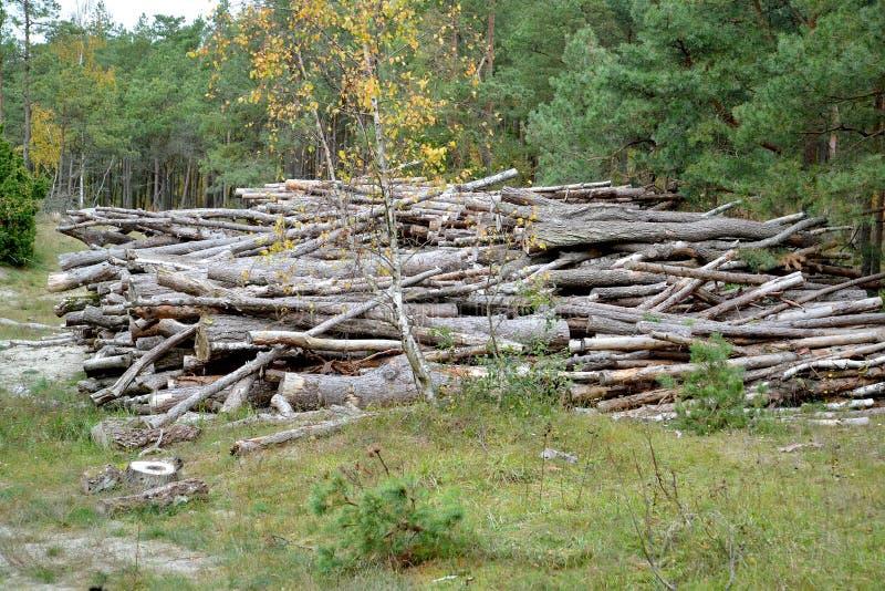 Журналы сосны лежат в большой части в хвойном дереве logging стоковая фотография