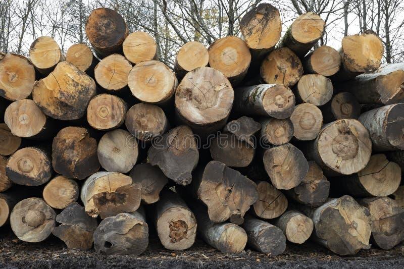 Журналы штабелированные в куче, извлечении тимберса обезлесение стоковое фото rf