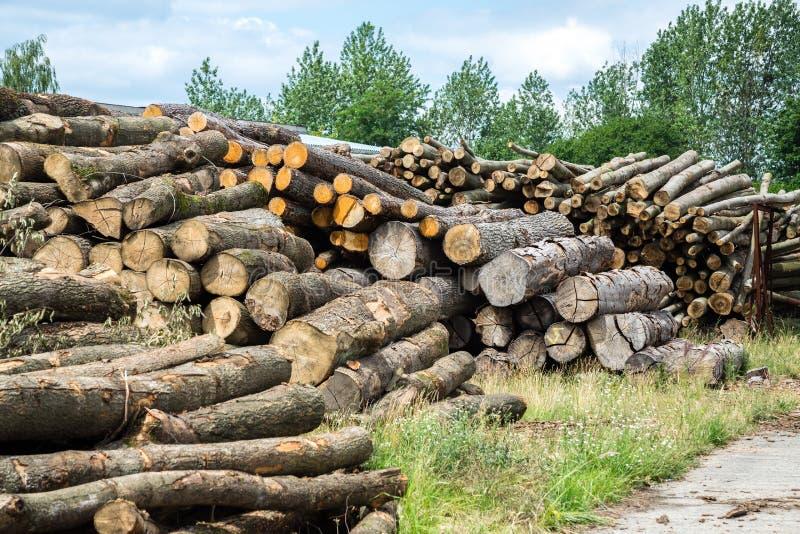 Журналы древесины сосны стоковая фотография rf