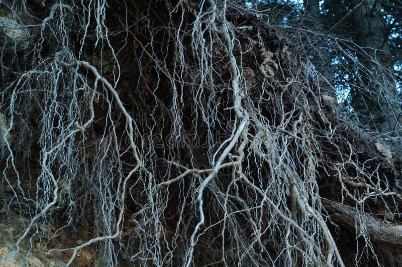 жуткие корни стоковые изображения rf