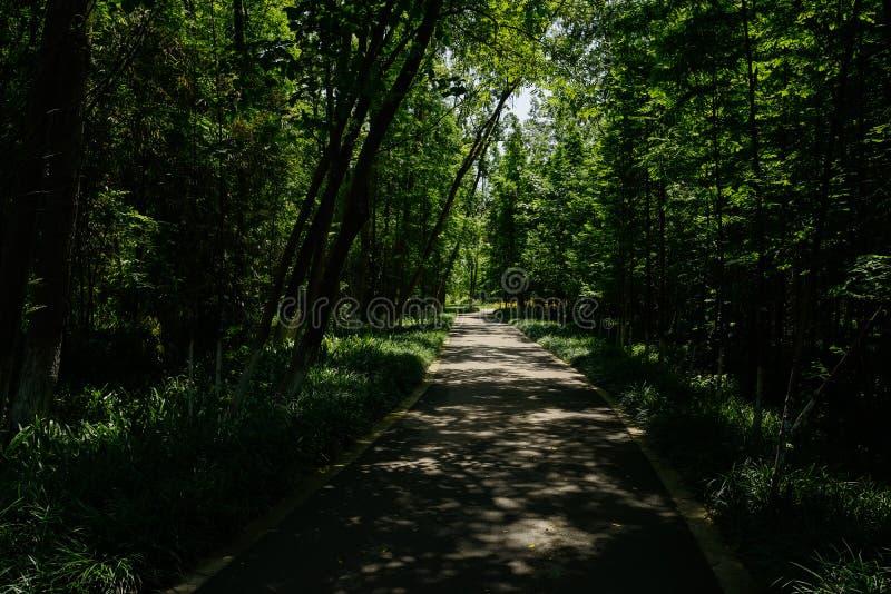 Заасфальтированный путь в тенистых древесинах солнечного лета стоковая фотография rf