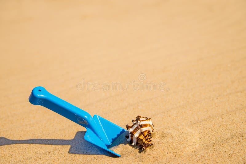 Забавляйтесь, копните с улиткой на солнечном пляже стоковая фотография