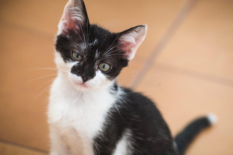 Забавный черно-белый смокинг-котенок лениво смотрит на камеру стоковое фото rf