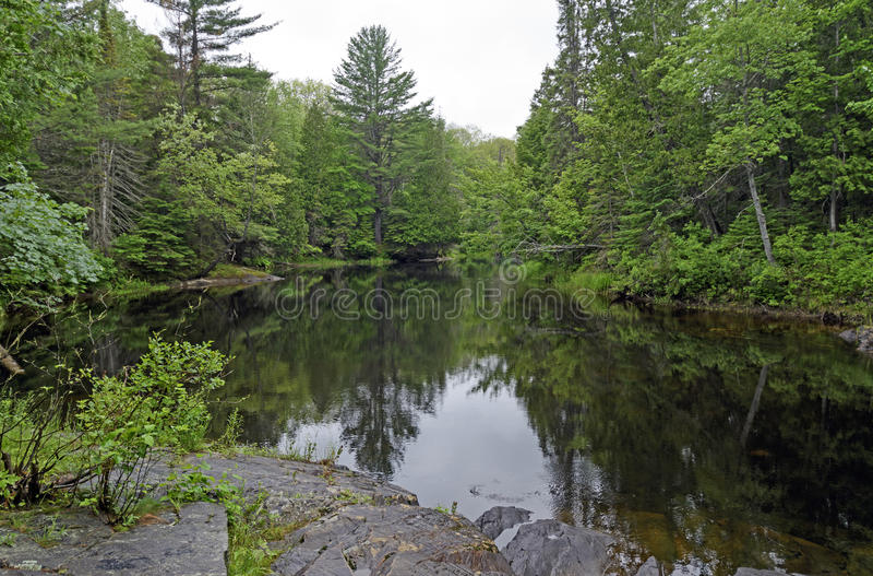 Заболоченный рукав реки подпора в северных древесинах стоковое изображение