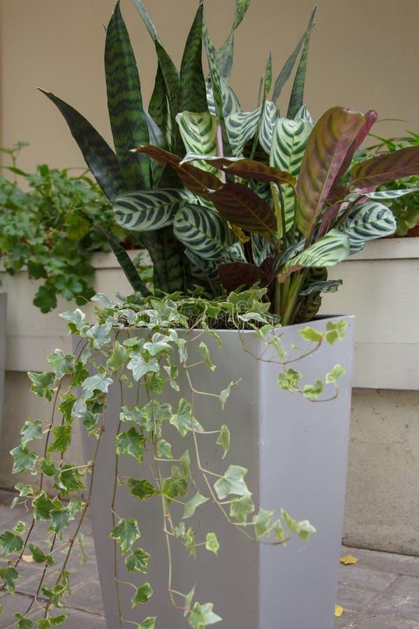 Забота о растениях Трансплантация и опрыскивание Различные уличные растения в горшочках стоковые фотографии rf
