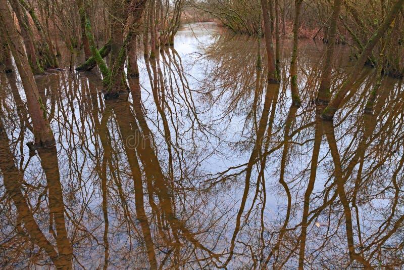 Заболотьте с затопленным лесом в Равенне, Италии стоковое фото