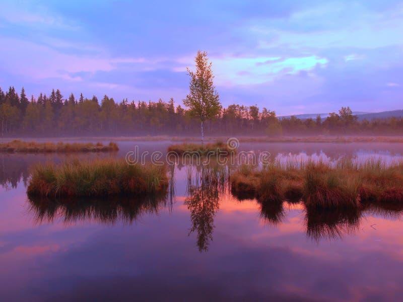 Заболотьте с мирным уровнем воды в загадочном лесе, молодом дереве на острове в середине Свежий зеленый цвет трав и травы стоковое изображение rf