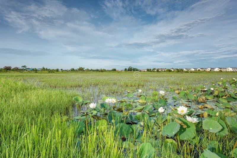 Заболоченные места в заповеднике, обнаруженном местонахождение болоте Nong Dea на Udonthani стоковые фото