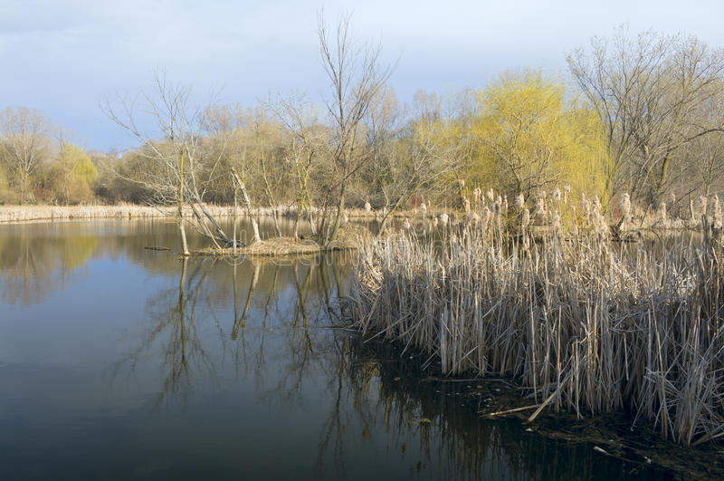 Заболоченные места и лес в центре природы стоковое изображение