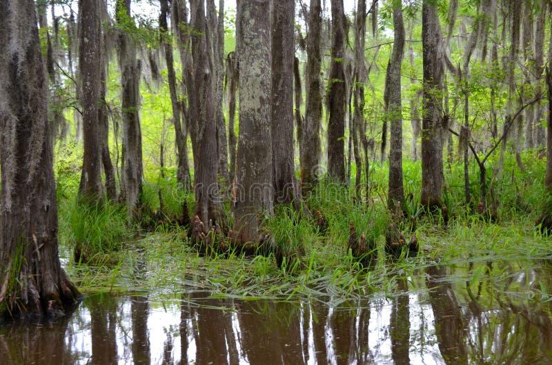 заболоченный рукав реки Луизиана стоковое фото