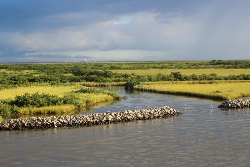 Заболоченный рукав реки Lafourche, Луизиана стоковое изображение