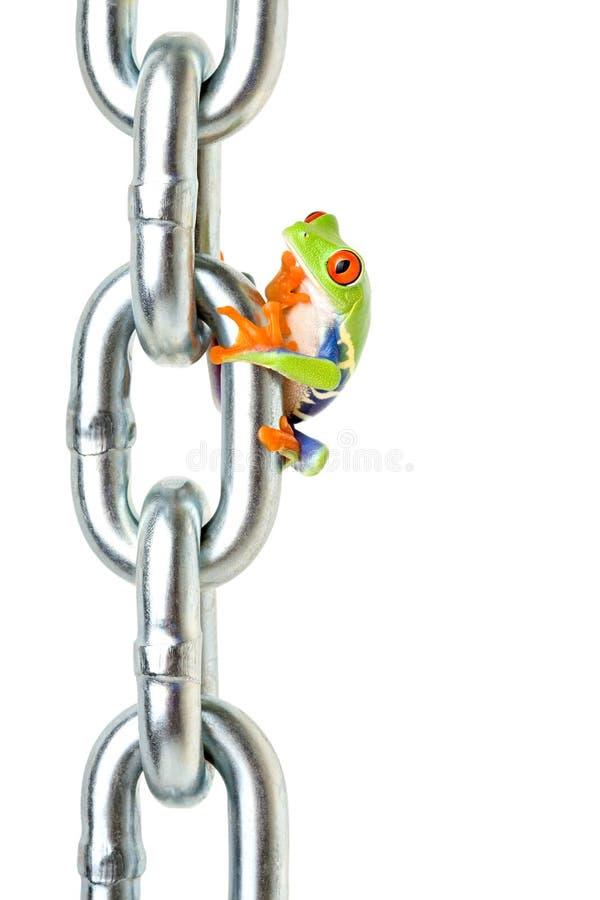 забыл лягушку что-то стоковые фотографии rf