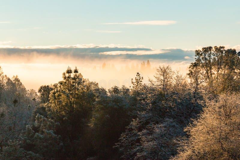 Завальцовка тумана через лес стоковое фото