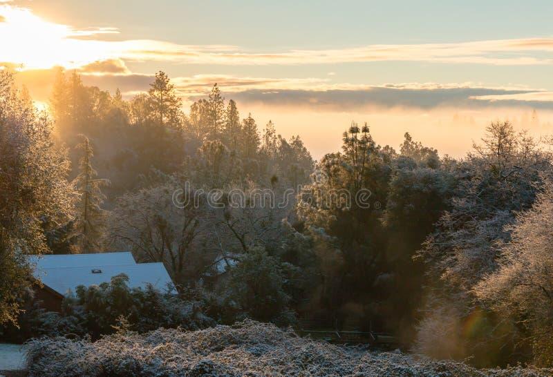 Завальцовка тумана через лес стоковая фотография rf