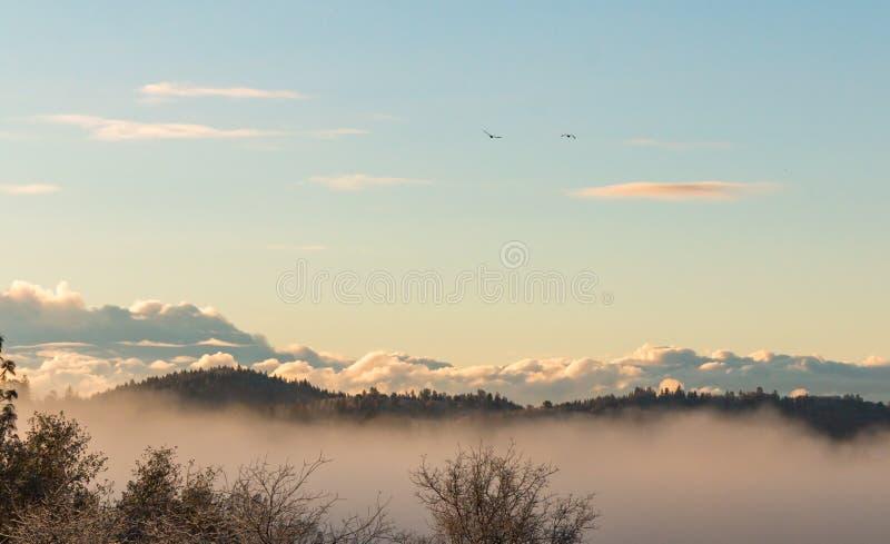 Завальцовка тумана через лес стоковые изображения