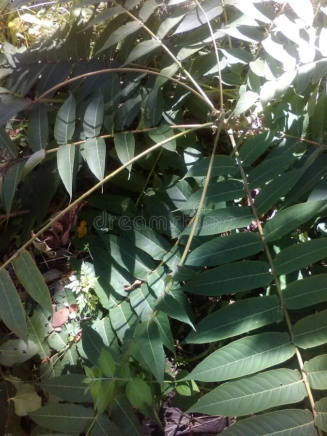 Завихряясь жизнь растений стоковое фото rf