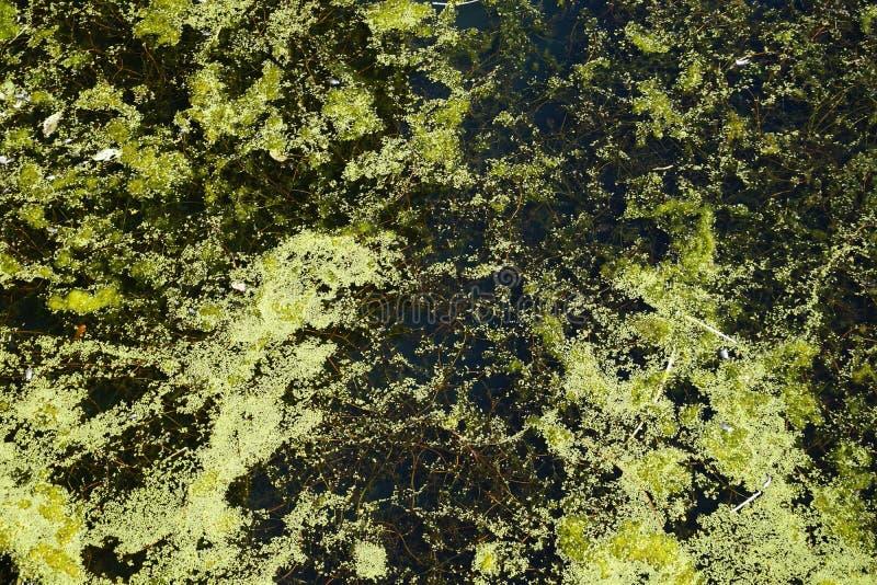 Завихряясь текстура предпосылки flotsam воды горизонтальная стоковое изображение