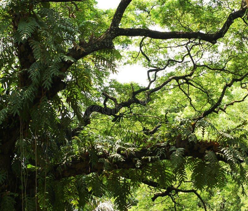 заводы ветвей стоковое изображение rf