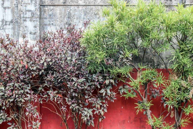 Заводы в саде с ржавой стеной стоковое фото