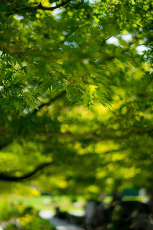 Заводы в японском саде стоковые фото