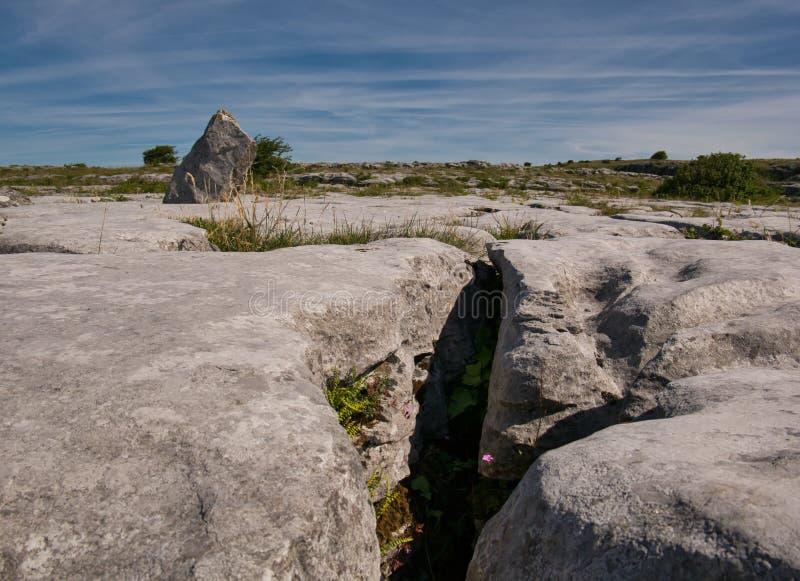 Заводы в crevice скалистого ландшафта стоковые фотографии rf