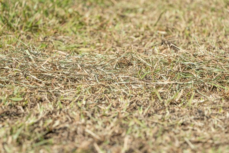 Заводы и трава фото запаса мертвые должные к засухе 2 лета стоковое изображение rf