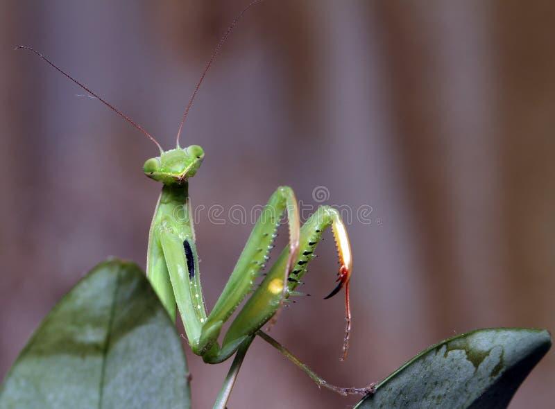 Заводы и mantis стоковое фото rf