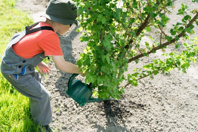 Заводы молодого мальчика моча в его vegeetable саде стоковое изображение