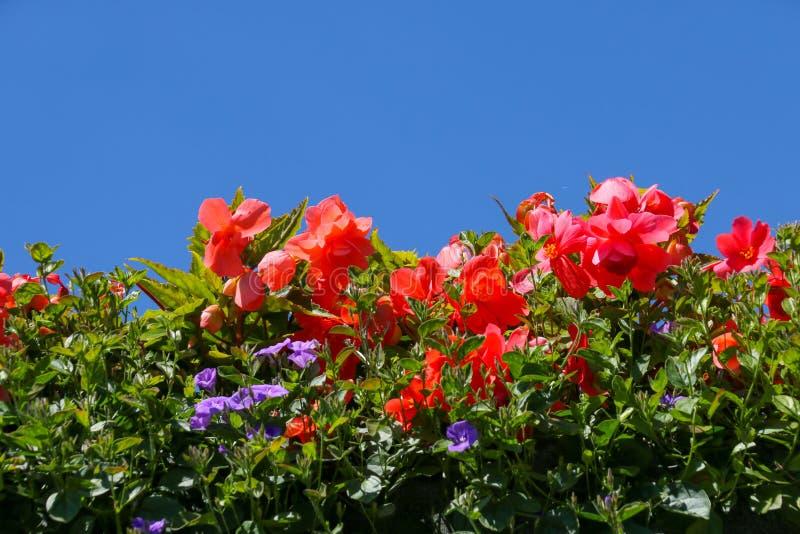 Заводы постельных принадлежностей лета против ясного голубого неба стоковое изображение