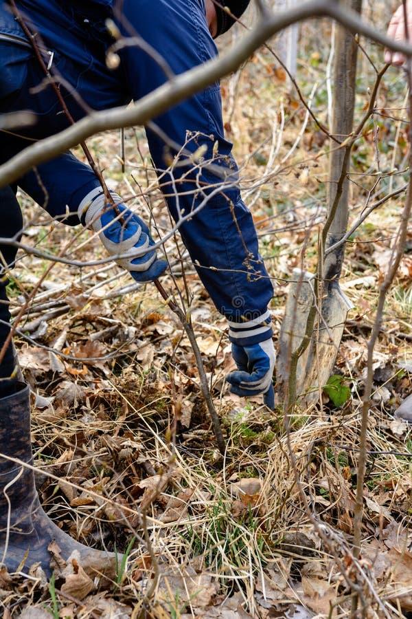 Заводы человека небольшое дерево, лопаткоулавливатель владениями рук выкапывают концепцию земли, природы, окружающей среды и экол стоковые фото