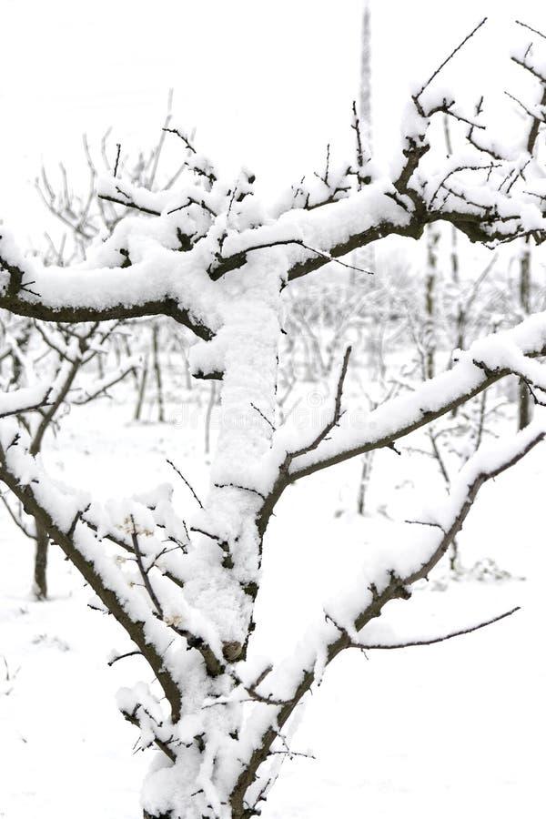 Заводы Snowy в конце от февраля следовать влияниями сибирской массы воздуха достигли в южной Италии в кампании стоковая фотография rf
