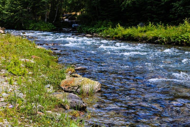 Заводь запруды Rausor в горах Iezer, Румынии Небольшой поток воды в лесе стоковые фото