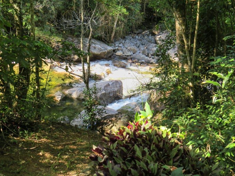 Заводь с речными порогами в середине леса стоковое изображение rf